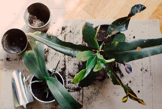 حشره ریز سفید گیاهان آپارتمانی