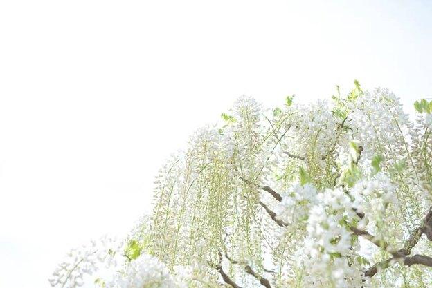 نحوه رهایی از شر مگس های سفید از روی درخت ها و گیاهان
