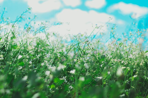 مواد نظافت منزل و علائم حساسیت فصلی