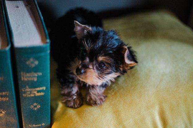 کنترل کک حیوانات خانگی در 5 گام