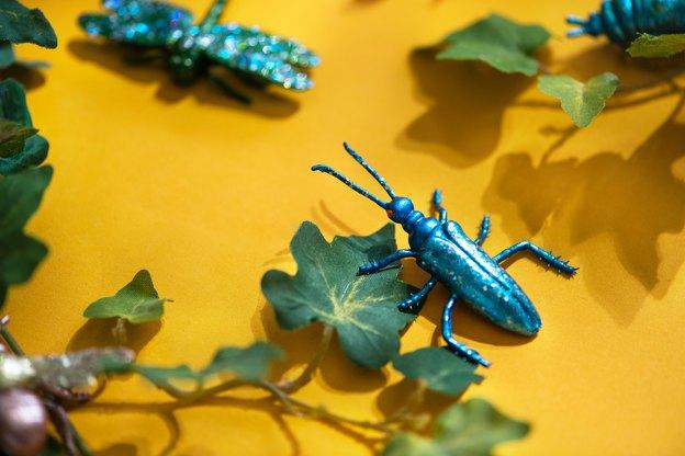 حشرات: ۶ نکته برای دفع سوسک ها