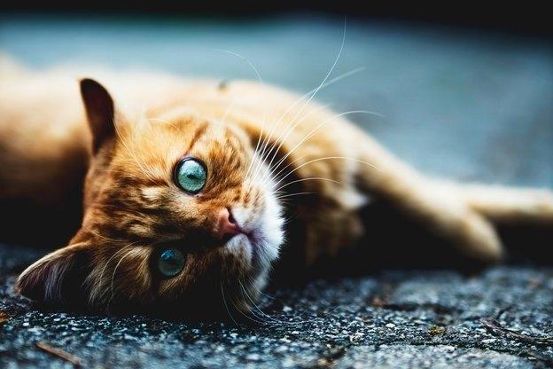 چرا گربه ها مانند دیوانه ها رفتار کرده و به اطراف میدوند؟