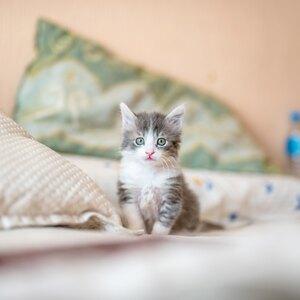 طرز تهیه بهترین غذاهای خانگی برای گربه ها و بچه گربه ها