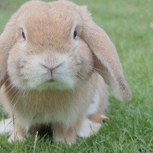 راهنمای نگهداری از خرگوش