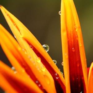 آب دادن به گل و گیاهان آپارتمانی و باغچه