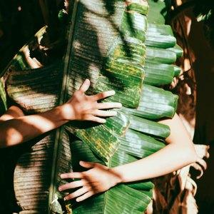 راهنمای نگهداری از گل سنجاق: انجیر گریان در خانه Ficus Benjamina