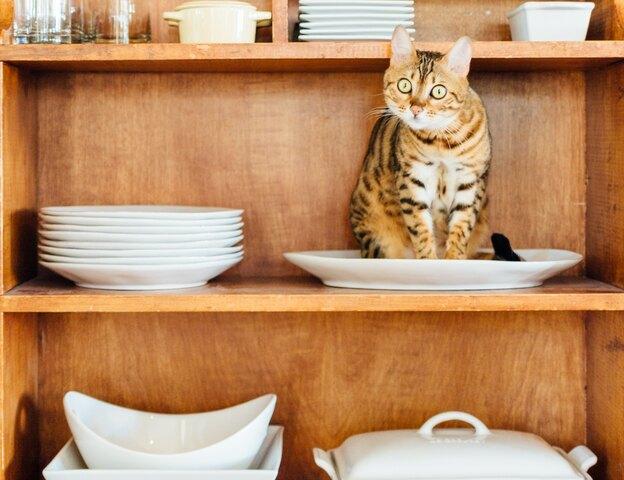 کابینت های آشپزخانه: نوسازی ارزان