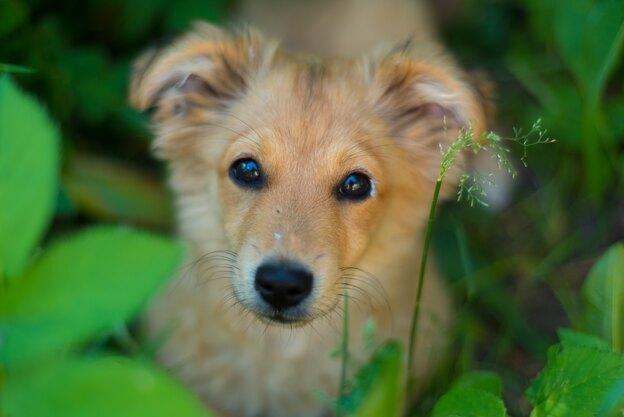 چطور دمای بدن توله سگ را کم کنیم؟
