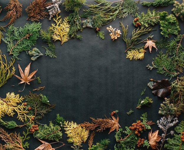 چرا برگ گیاهان آپارتمانی می ریزد؟