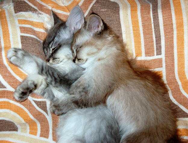 ۳۰ روز اول نگهداری از بچه گربه