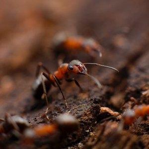 ۱۰ نکته برای برای کنترل حشرات و حیوانات موذی