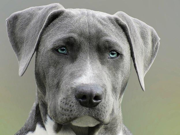 نژاد سگ: از کوچک به بزرگ