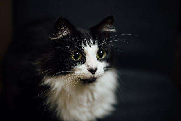 گربه ها چگونه نشان می دهند که دوست تان دارند؟