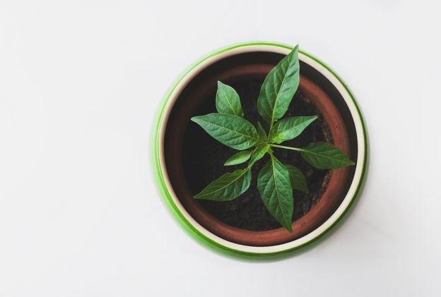 چند دلیل برای نظافت خانه با محصولات ارگانیک
