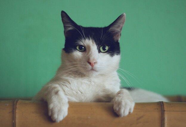 ۹ راز برای نگهداری گربه خانگی شاد و خوشحال