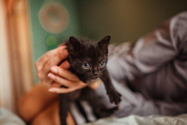 راهنمای کامل واکسیناسیون گربه ها و زمان انجام آن