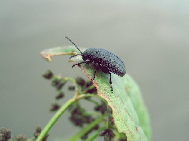 حشرات سیاه رنگ کوچک خانه ها چه هستند؟