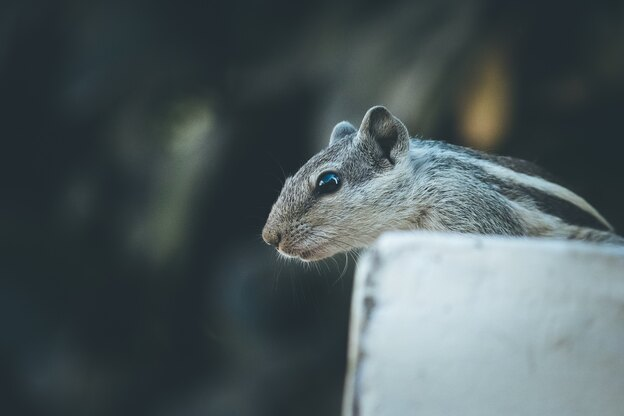 روشهای گرفتن موش