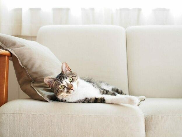 راهنمای مشتریان سنجاق: سه سال اول نگهداری از گربه چطور پیش می رود؟