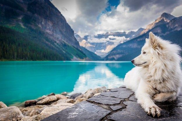 حیوانات خانگی: خنک نگه داشتن سگ ها در گرما