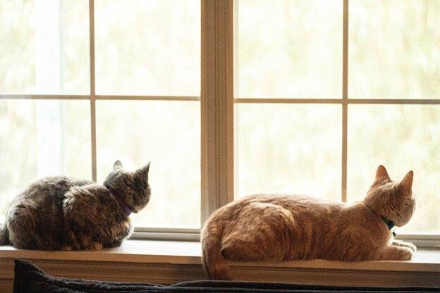 ۶ راه خانگی از بین بردن کک گربه