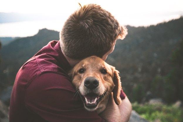 حال سگ شما چطور است؟