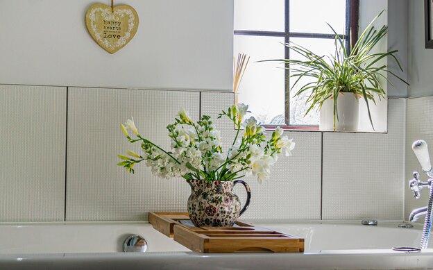 گیاه مناسب دستشویی