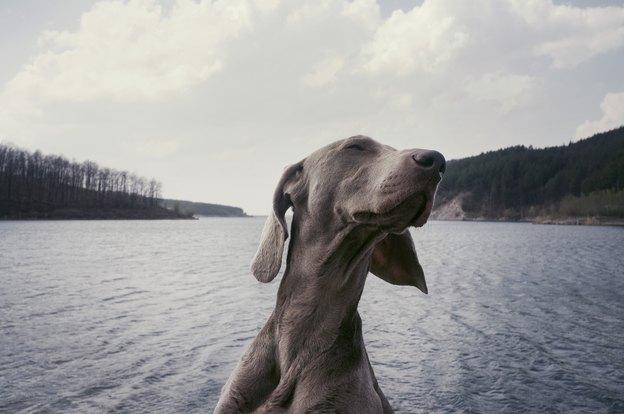 مسئولیت مراقبت و نگهداری از سگ