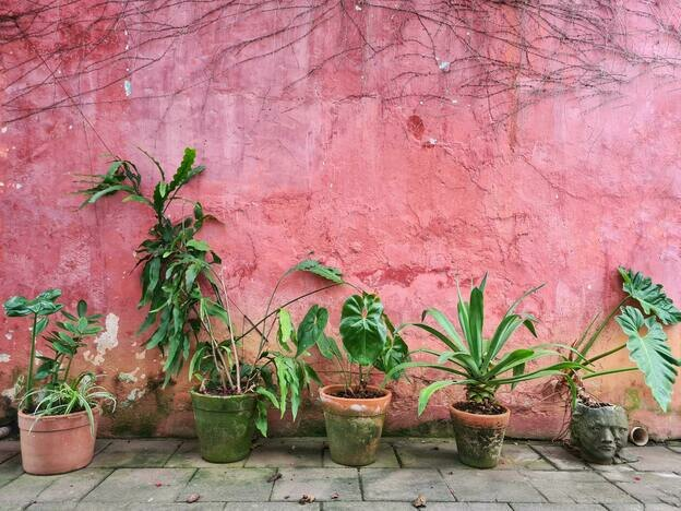 بهترین گیاهان خانگی آویز برای افراد تازه کار که نگهداری از آنها سخت نیست
