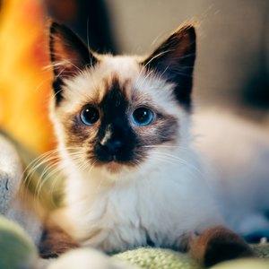 سی روز اولی که بچه گربه آوردید