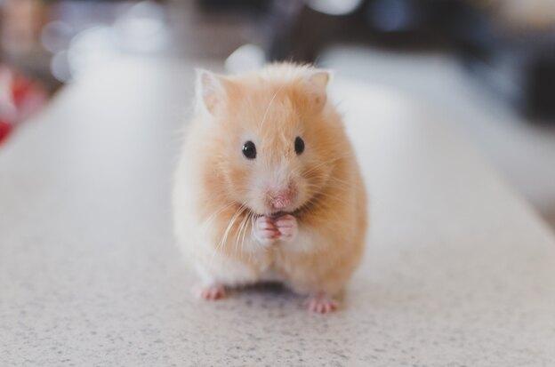 نحوه رهایی از شر موش های خانه