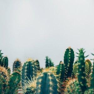 نکات اولیه نگهداری از گیاهان آپارتمانی