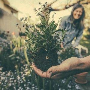 گلکاری و باغچه آرایی فصل بهار