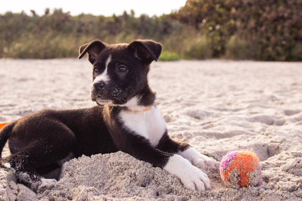 تربیت سگ: پرتاب کردن توپ و آوردنش