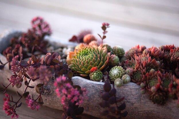 انواع گلهای آپارتمانی و روش نگهداری آنها