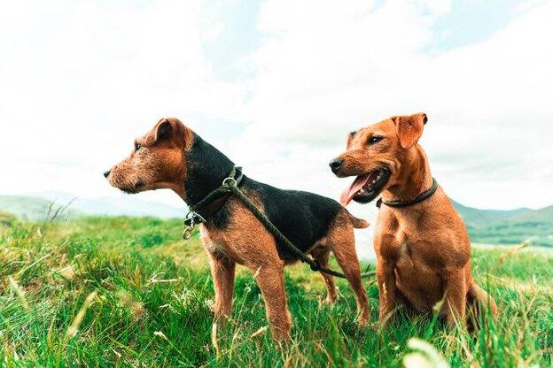 همه چیز درباره واکسیناسیون سگ ها و واکسن های تقویتی