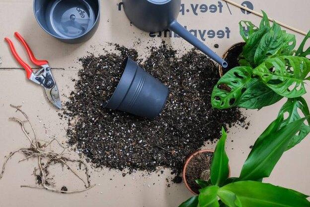 معرفی ترفندهایی برای تقویت و سلامت گیاهان خانگی