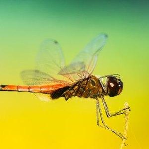 ۱۰ راهکار عالی برای دفع حشرات خانگی