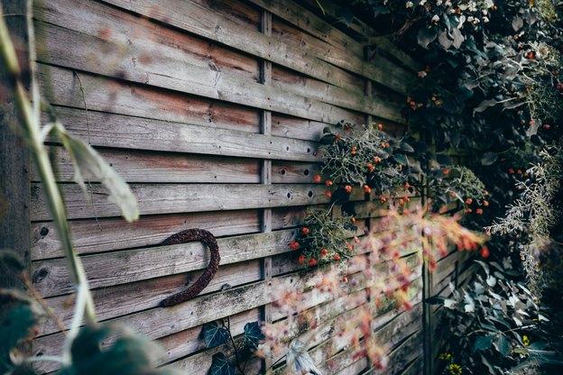 با این ۶ گیاه بطور طبیعی پشه ها را دور کنید!