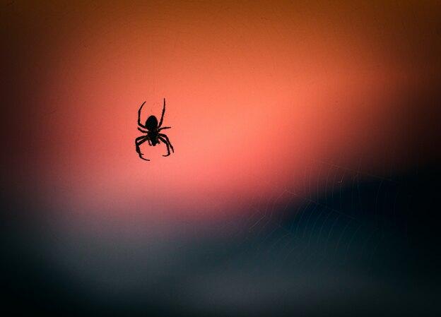 کنه تار عنکبوتی
