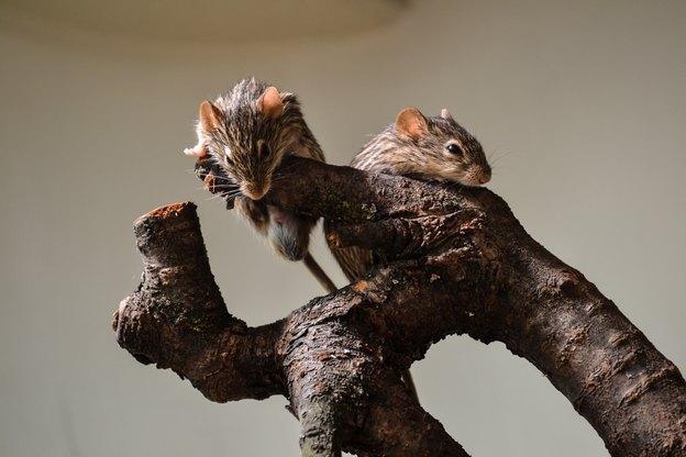 گرفتن موش در خانه