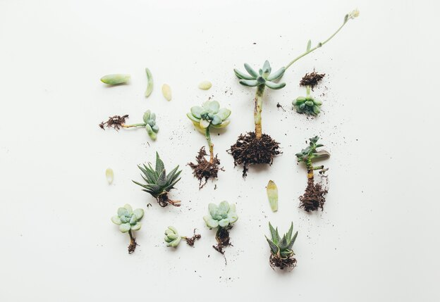 انواع گلهای اپارتمانی مناسب خانه های پت
