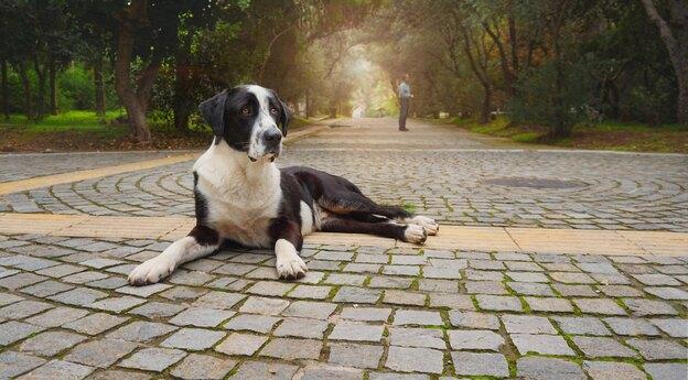 ۱۵ نژاد از محبوب ترین نژادهای سگ بزرگ
