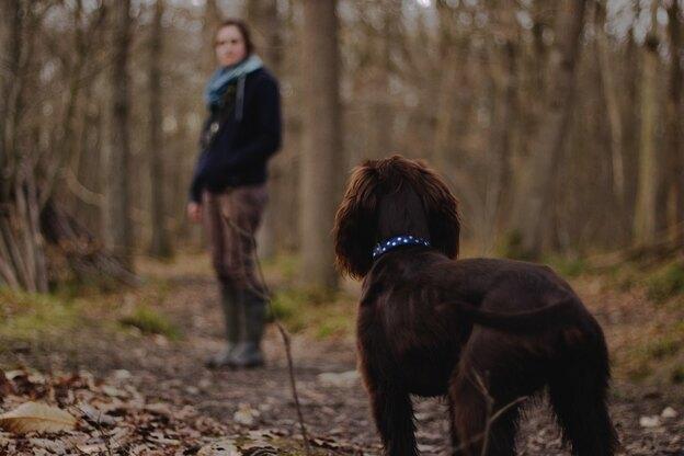 چگونه سگ ها را به پیاده روی ببریم