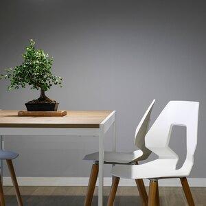 نگهداری از گیاهان آپارتمانی: فیکوس بنژامین