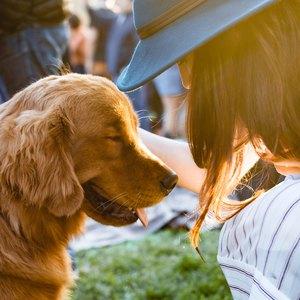 برترین نژاد سگ به آرامی