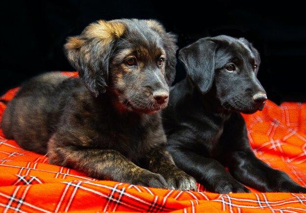 اجتماعی بارآوردن توله سگ در زمان فاصله گذاری اجتماعی