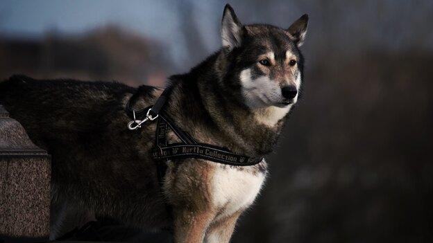 ۸ نوع سگ خدماتی و توانایی هایشان