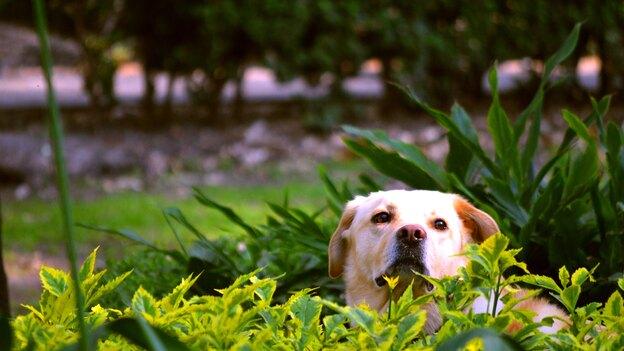از بین بردن بو و لکه های به جا مانده توسط سگ ها