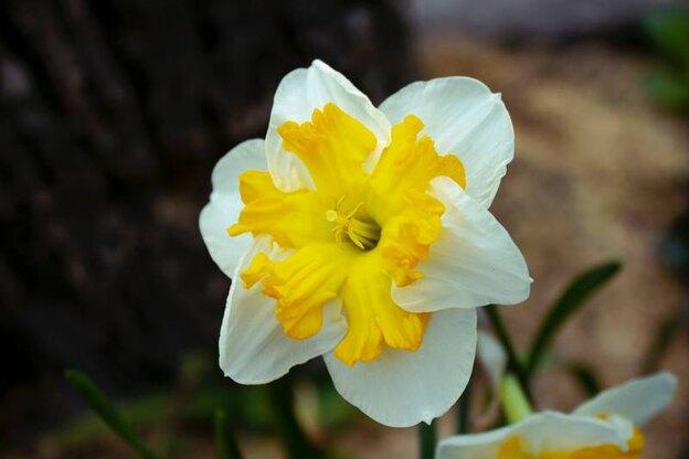 معرفی گیاهان گلدار آپارتمانی و نحوه نگهداری از آنها